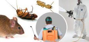 شركة مكافحة حشرات بالكويت 1